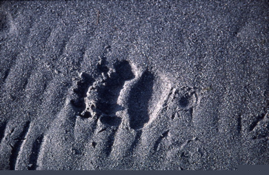 Beartracks_2