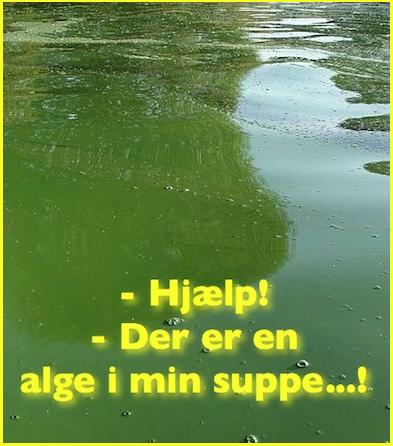 hvad er alger