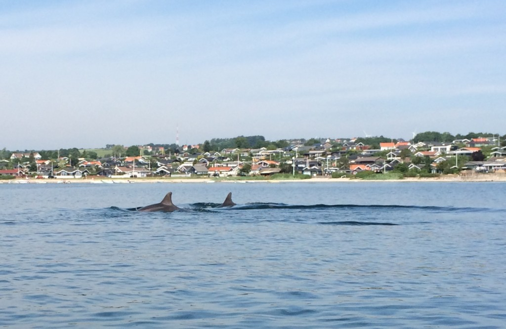 Delfiner 07