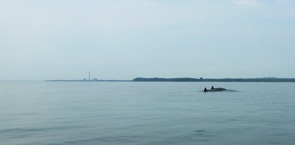 Delfiner 10