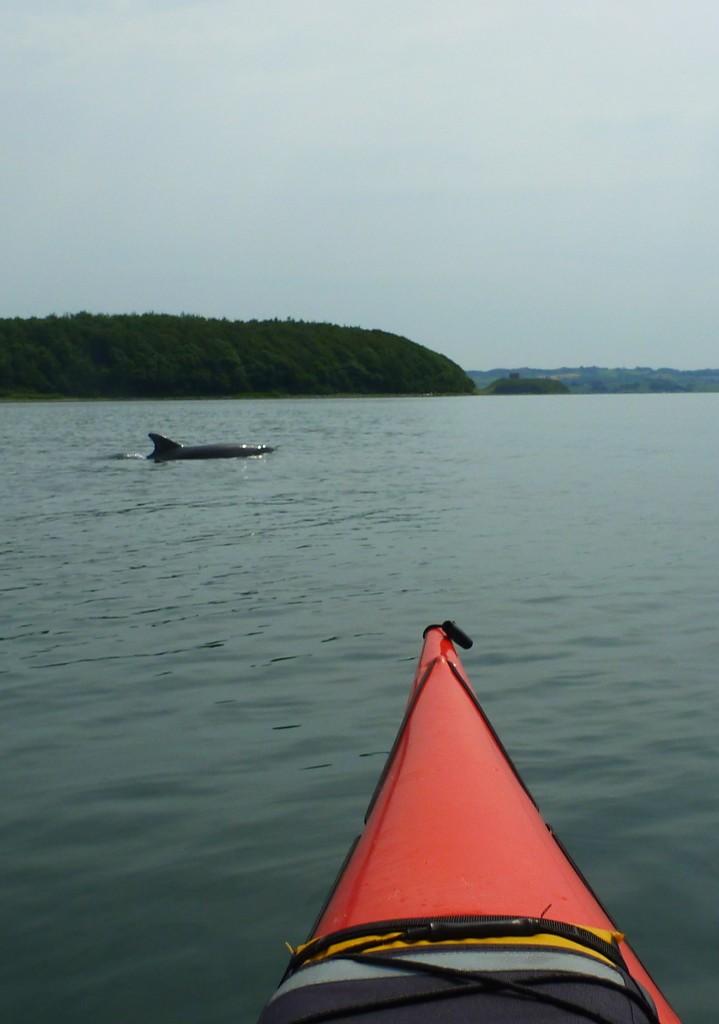 Delfiner 12