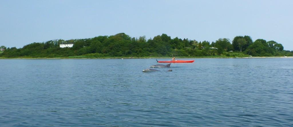 Delfiner 17