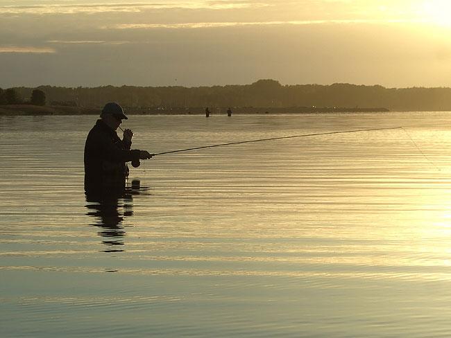 kystfluefisker-5213