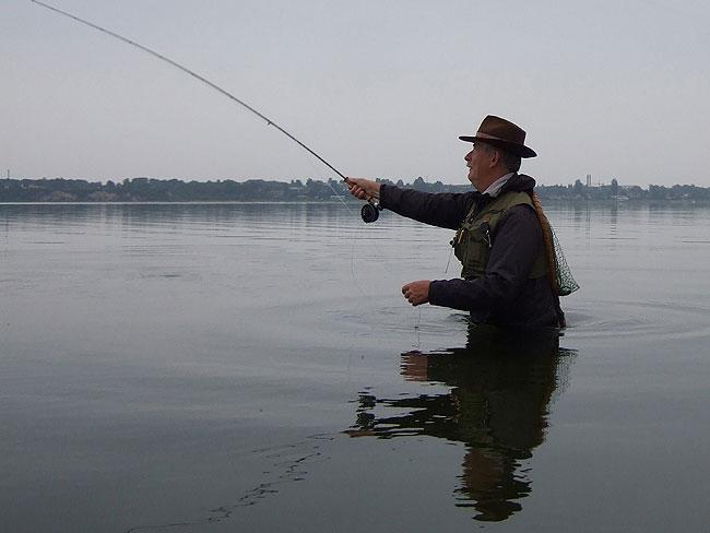 kystfluefisker-5281