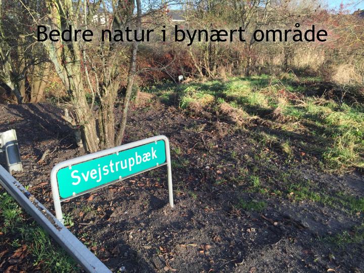 Svejstrup Bæk.006